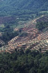 Forest loss in Malaysian Borneo