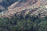 Forest loss in Borneo