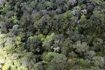 Borneo rainforest -- sabah_0343