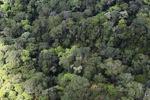 Borneo rainforest -- sabah_0345