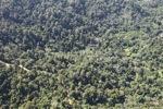 Borneo rainforest -- sabah_0347