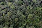 Borneo rainforest -- sabah_0348