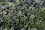 Borneo rainforest -- sabah_0349