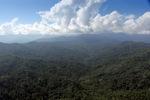 Borneo rainforest -- sabah_0350