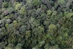 Borneo rainforest -- sabah_0351