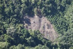 Deforestation in Borneo -- sabah_0352