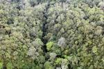 Borneo rainforest -- sabah_0355