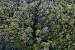 Borneo rainforest -- sabah_0357