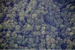 Borneo rainforest -- sabah_0359