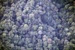 Borneo rainforest -- sabah_0362