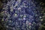 Borneo rainforest -- sabah_0365