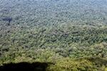 Borneo rainforest -- sabah_0366