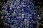 Borneo rainforest -- sabah_0367