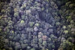 Borneo rainforest -- sabah_0368