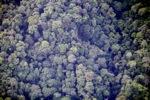 Borneo rainforest -- sabah_0369
