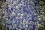 Borneo rainforest -- sabah_0371