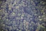 Borneo rainforest -- sabah_0372