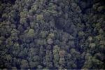 Borneo rainforest -- sabah_0373