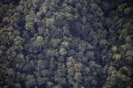 Borneo rainforest -- sabah_0374