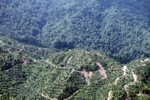 Oil palm plantation -- sabah_0375