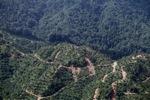 Oil palm plantation -- sabah_0376