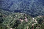 Oil palm plantation -- sabah_0377