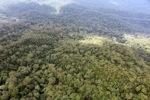 Borneo rainforest -- sabah_0378