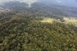 Borneo rainforest -- sabah_0379