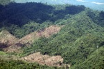 Forest loss in Malaysian Borneo -- sabah_0381