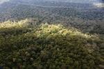 Borneo rainforest -- sabah_0386