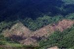 Loss of rainforest in Sabah, Malaysia -- sabah_0388