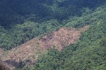 Loss of rainforest in Malaysia -- sabah_0389