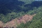 Chopping down rainforest in Malaysian Borneo -- sabah_0390