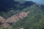 Deforestation -- sabah_0394