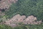 Deforestation -- sabah_0395