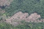 Deforestation -- sabah_0396