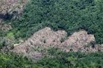 Deforestation -- sabah_0397