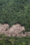 Deforestation -- sabah_0398