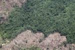 Deforestation -- sabah_0401