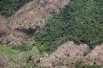 Deforestation in Borneo -- sabah_0403