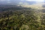 Borneo rainforest -- sabah_0411