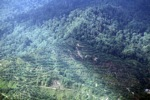 Oil palm plantation -- sabah_0412
