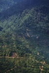 Oil palm plantation -- sabah_0414