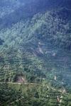 Oil palm plantation -- sabah_0415