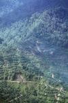Oil palm plantation -- sabah_0416
