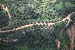 Oil palm plantation -- sabah_0417