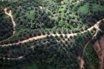 Oil palm plantation -- sabah_0418