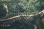 Oil palm plantation -- sabah_0419