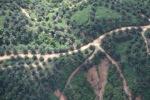 Oil palm plantation -- sabah_0420