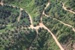 Oil palm plantation -- sabah_0422
